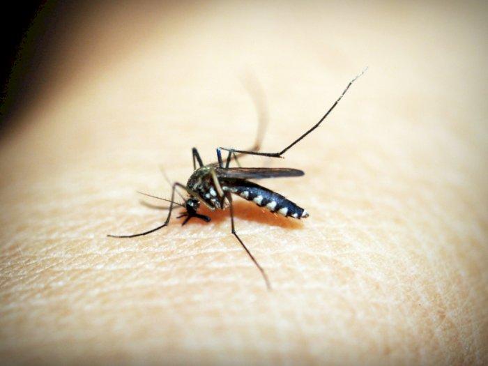 4 Cara Mencegah Gigitan Nyamuk dengan Kebiasaan  Ini