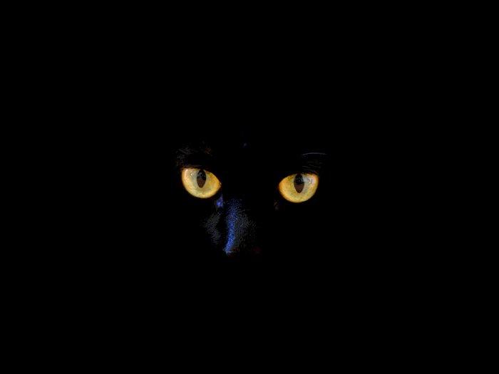 Fakta atau Mitos Kucing Hitam Pembawa Sial?