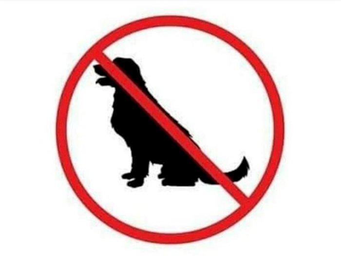 Ini Alasan Daging Anjing Tidak Layak untuk Dimakan