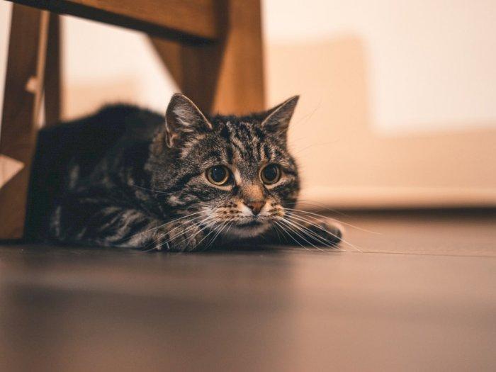 Jangan Biarkan Kucing Kesayanganmu Kesepian, Perhatikan Tanda-Tandanya!