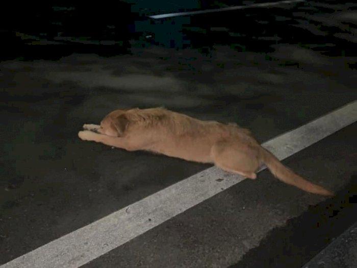 Anjing Ini Kejar Majikannya Hingga Kelelahan Saat Dibuang dari Mobil, Netizen: Sedih!