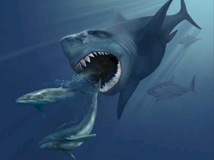 Mengenal Megalodon si Hiu Super, Predator Terbesar yang Pernah Hidup di Dunia