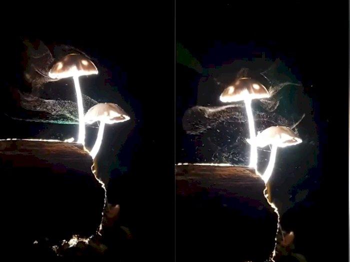 Sedang Jalan di Malam Hari, Orang ini Temukan Jamur yang Bercahaya, Bikin Netizen Terpukau