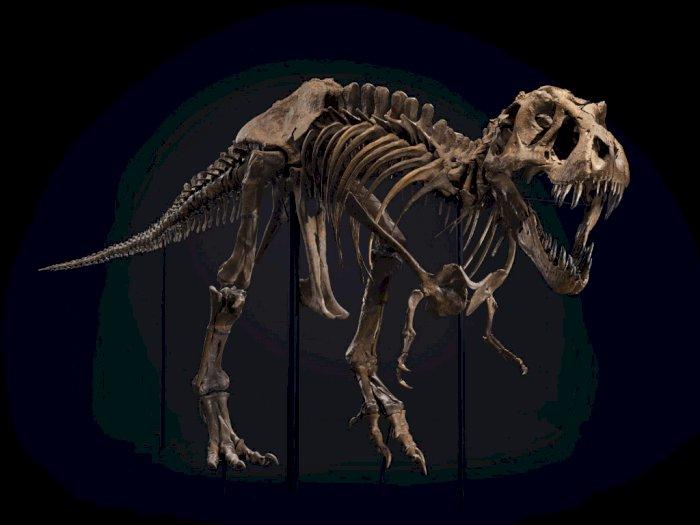 Salah Satu Kerangka T-Rex Terbesar di Bumi Siap Dilelang, Segini Harganya