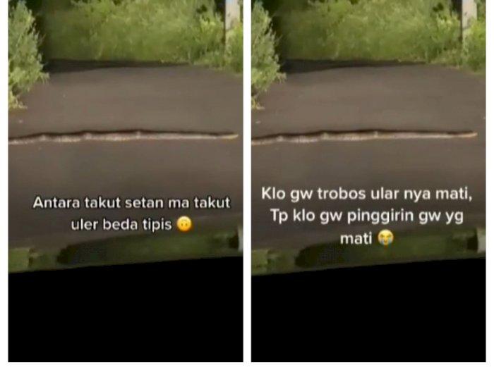 Viral Mobil di Hadang Ular di Tengah Jalan, Ditungguin Lambat, Mau Mindahin Takut Dipatok