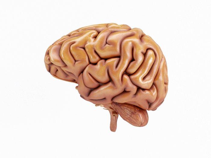 Bagaimana Diet Rendah Karbohidrat Meningkatkan Kesehatan Otak?