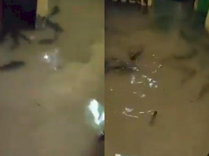 Viral Rumah Dipenuhi Ikan Lele saat Banjir, Netizen: Langsung Goreng!