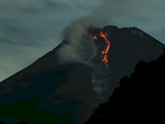 Penampakan Gunung Merapi Muntahkan 3 Kali Awan Panas Sejauh 700-1.200 Meter