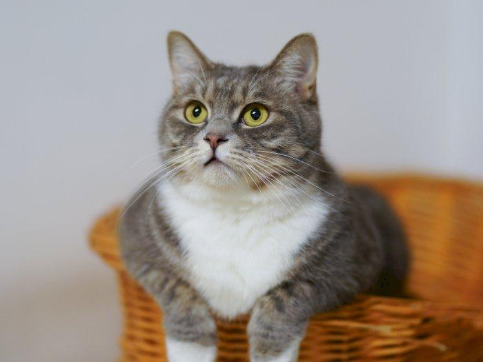 15 Orang Positif COVID-19 Usai Rayakan Pesta Ulang Tahun Kucing