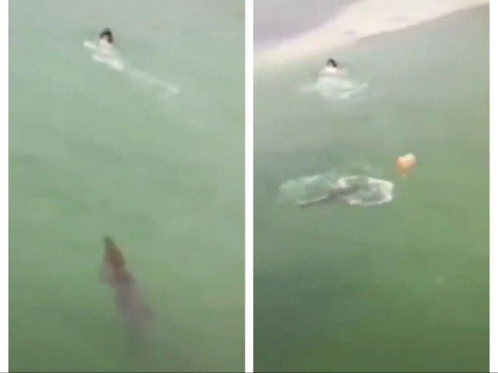 Mengerikan, Orang Lagi Berenang di Pantai Dikejar Buaya