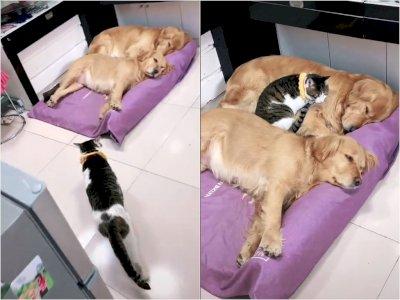 Momen Keakraban Anjing dan Kucing Saat Tidur Bersama, Bikin Netizen Gemas