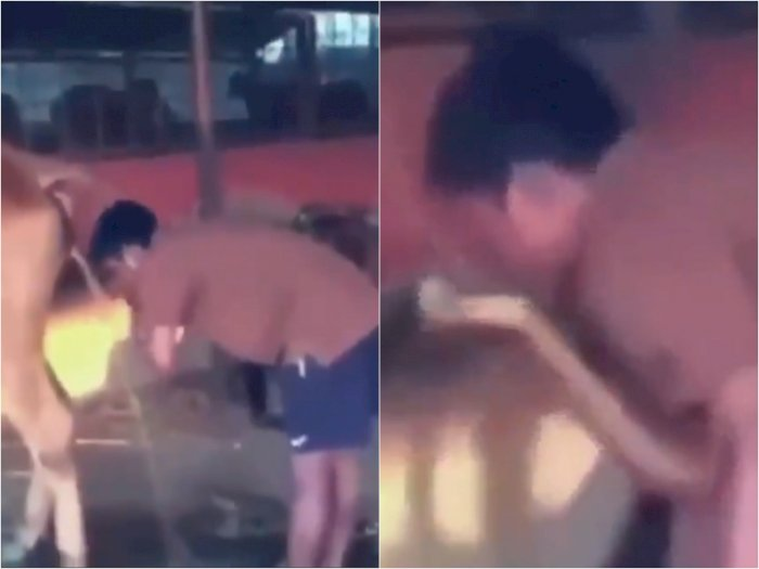 Video Pria yang Cuci Wajah dan Minum Air Urin Sapi, Bikin Netizen Jijik