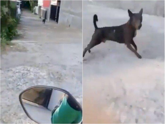 Niatnya Mau Antar Orderan, Ojol ini Malah Disamperin dan Dikejar Anjing yang Ada di Gang