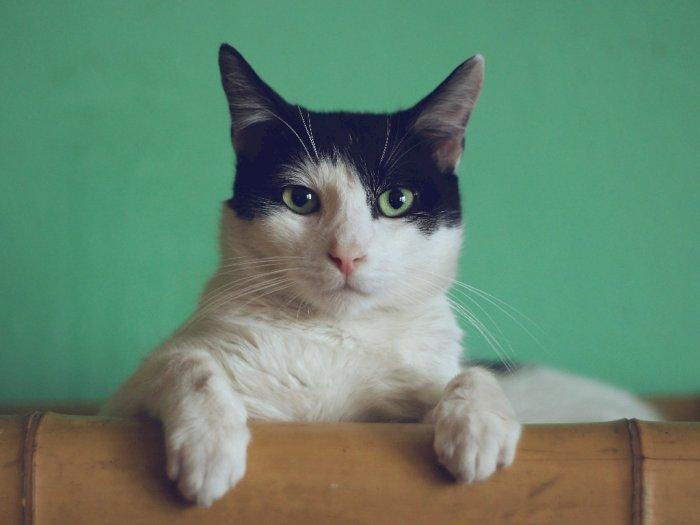 Jangan Coba-coba, Daging Kucing Tak Layak Dikonsumsi, Berbahaya Bagi Tubuh