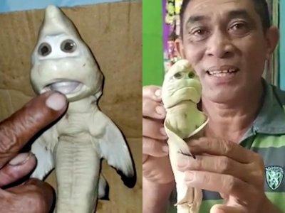 Nelayan Ini Menemukan Bayi Hiu yang Menyeramkan, Disebut Mirip 'Wajah Manusia'
