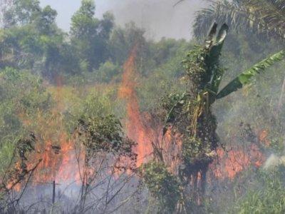 Hati-hati! Ada 91 Titik Api Terpantau di Riau, Petugas Gerak Cepat