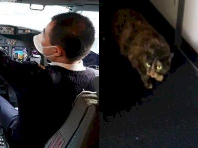 Pesawat Terpaksa Buat Pendaratan Darurat Usai Kucing Marah Masuk ke Kokpit & Serang Pilot