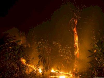 Jangan Dibakar, Pemprov Riau Sediakan Alat Berat Gratis untuk Masyarakat Buka Lahan
