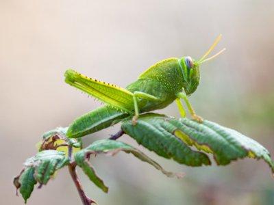 Tak Punya Hidung Jadi Alasan Serangga Tidak Bersin Seperti Hewan Lain