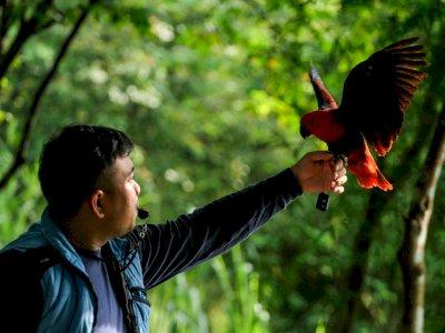 FOTO: Komunitas Pecinta Burung Paruh Bengkok di Depok