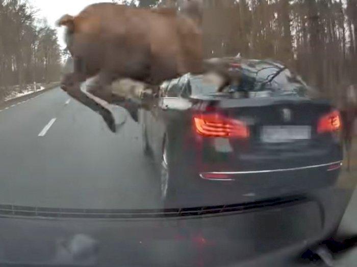 Apes! Mobil BMW M5 Series Ini Dilompati Kawanan Rusa di Tengah Jalan