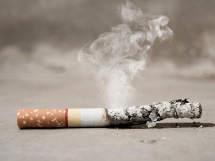 Ada 5 Fakta Rokok yang Jarang Diungkap, Apa Saja?