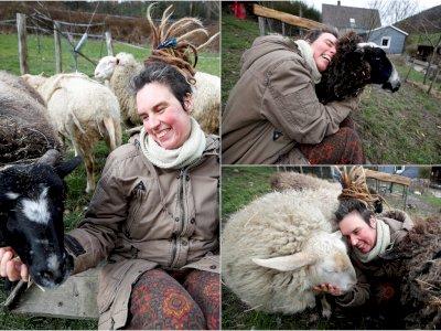 Dear Jomblo, Peternakan Jerman Tawarkan Domba untuk Dipeluk Atasi Kesepian