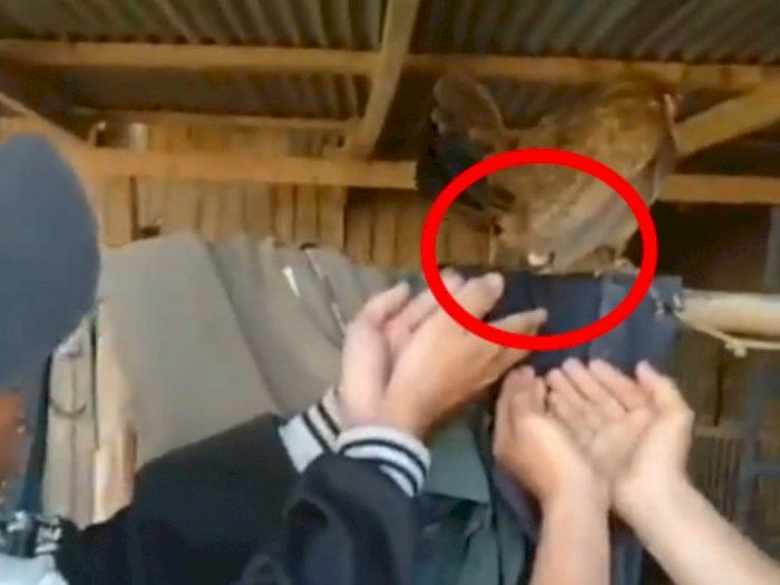Momen Kumpulan Pria 'Semangati' Ayam Lagi Ngeden Bertelur, Tampung Pakai Tangan