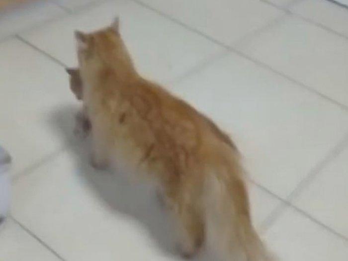 Mengharukan! Kucing Liar di Turki Ini Bawa Anaknya yang Sakit ke Rumah Sakit