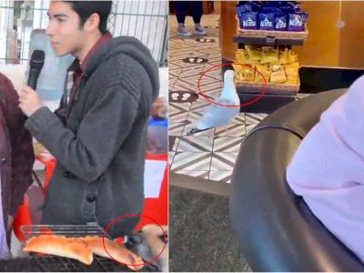 Aksi Kocak Anjing dan Burung yang Curi Makanan Diam-diam, Bikin Heran Netizen