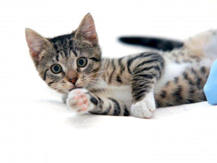 Ailurofobia, Ketakutan Berlebihan pada Kucing, Ada yang Mengalaminya?