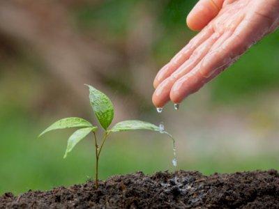 3 Mitos Tentang Menyiram Tanaman, Jangan Percaya Lagi!