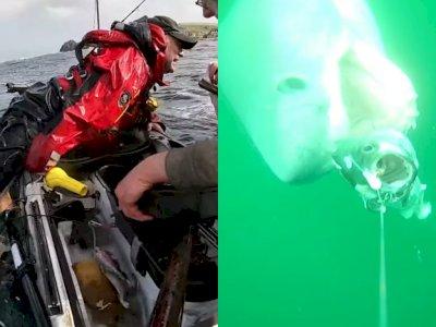 Detik-detik Dramatis Hiu Membalikkan Perahu Nelayan dan Menyeretnya ke Bawah Air