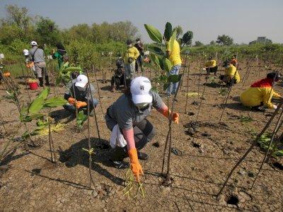 FOTO: Menanam Seribu Tanaman Mangrove Sambut Hari Bumi