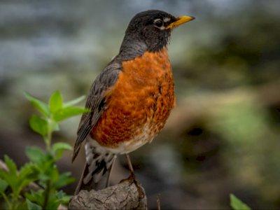 Tidak Punya Gigi, Begini Cara Burung Mengunyah Makanannya