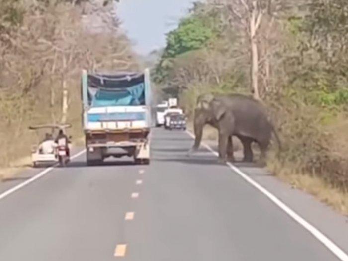 Viral Gajah Liar Thailand yang Setop dan Ingin Curi Tebu dari Truk di Jalan