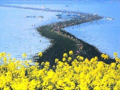 Fenomena Unik di Laut Jindo, Korea Selatan yang Terbelah Setahun Sekali