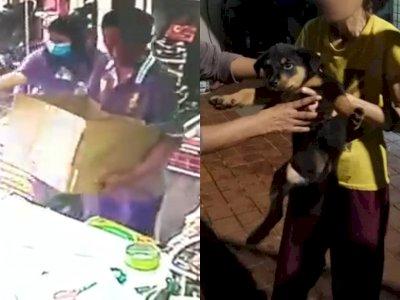 Pria Ini Culik Anjing Berusia 3 Bulan dan Coba Menjualnya, Ditolak karena Curiga Curian