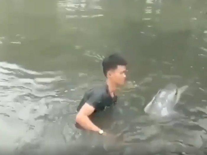 Seekor Lumba-lumba Nyasar Masuk ke Empang Warga di Maros, Sulawesi Selatan