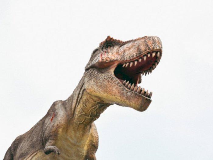 Mampu Menggigit dengan Tekanan Hingga 3500 Kg, Ini Rahasia Kekuatan Gigitan T-Rex