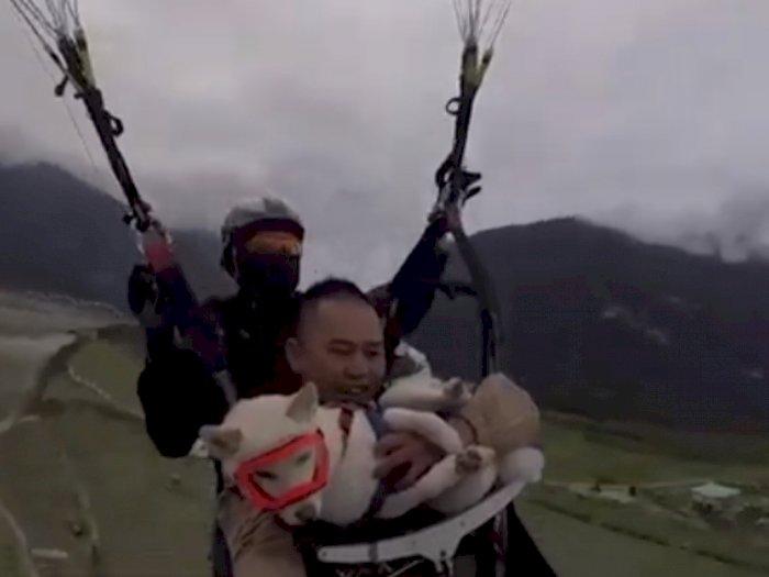 Video Saat Anjing yang Ikut Naik Paralayang dengan Majikannya, Bikin Netizen Gemas