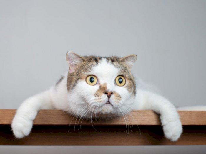 Ternyata Kucing juga Punya Golongan Darah, Lho