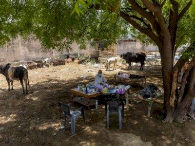 Desa di India Ini Pasangkan Kasur di Bawah Pohon untuk Isolasi Diri karena COVID-19!