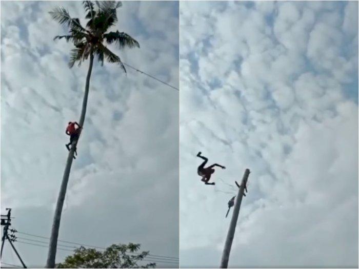 Mengerikan, Detik-detik Kakek Terpental saat Tebang Pohon Kelapa, Jatuh Puluhan Meter