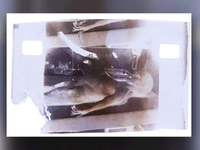 1 Frame dari Film Otopsi Alien di Tahun 1947 Dilelang Rp14 Miliar Sebagai NFT