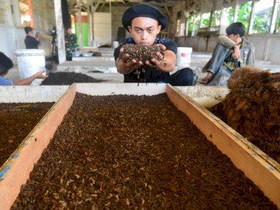 FOTO: Budi Daya Maggot Untuk Pakan Ternak
