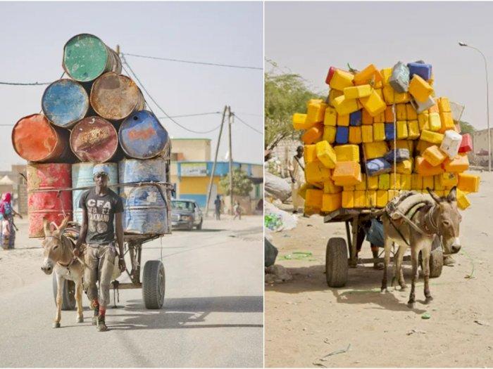 Kasihan, Keledai di Kota Sahara Harus Bekerja Seharian Mengangkat Air