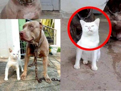 Dari Kecil Dibesarkan Anjing, Kucing Ini Tumbuh jadi Garang, Cara Berdirinya Jadi Sorotan