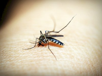 Seorang Pria Harus Berjuang untuk Hidup Setelah Terinfeksi Virus West Nile dan Covid-19