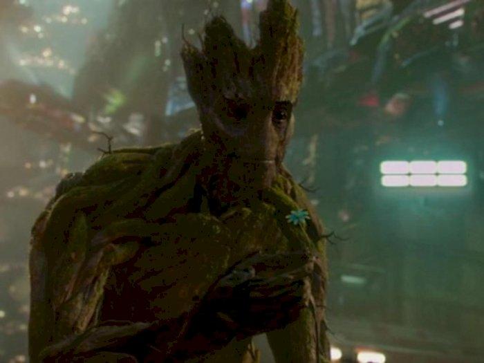 Beginilah Masa Depan Groot di Marvel Cinematic Universe